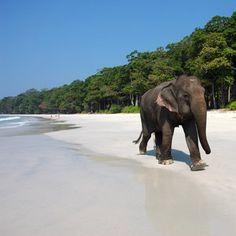 Radhanagar Beach on Havelock Island