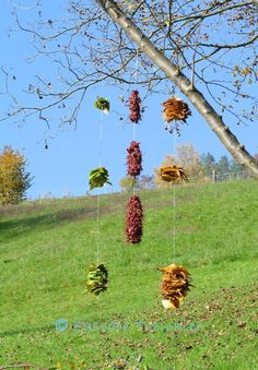 Natur-ART im November www.pascaletreichler.com