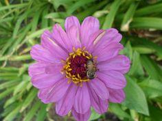 A very nice flower