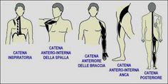 Le Quattro catene muscolari di Mézières :: Nordic Walking Milano