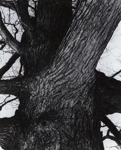 Edward Steichen (Lux.-Am. 1879-1973), Venerable Tree Trunk, 1932/1982…