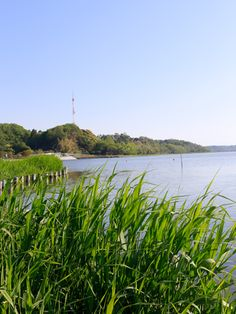 Lake Sanaru, Hamamatsu-city, Japan.  葦牙を過ぎて Reed to grow