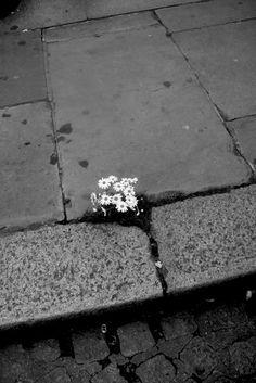 small urban happiness