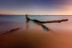 Drift wood - This is a large piece of drift wood along the shores of lake ontario at sunnyside park in Toronto. 5 min exposure