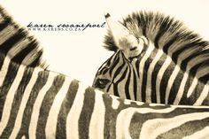 www.karens.co.za Wildlife, Animals, Animales, Animaux, Animal, Animais