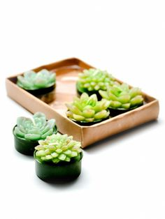 Succulent Tea Light Set  For the person who appreciates dinner parties and plants, this tea light set makes it easy to add a botanical touch to any table.     Get it now: Succulent Tea Light Set, $14 at LeifShop.com