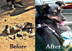 Saved dog - BEFORE & AFTER pics