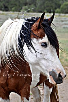 Horse / Another beautiful Ory Photo