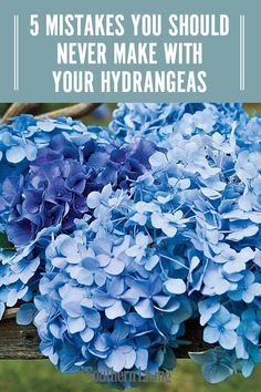There are a few ways to go wrong with your hydrangea care. We've rounded up a few of the most common mistakes that can leave your hydrangeas with bare, woody stems and no blooms. Avoid these errors and your hydrangeas will be flourishing in no time. Blooming Plants, Planting Flowers, Plants, Hydranga, Smooth Hydrangea, Plant Care, Planting Hydrangeas, Big Leaf Hydrangea, Hydrangea Plant Care