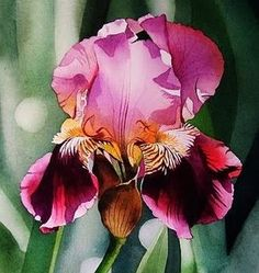 Iris watercolor ✏✏✏✏✏✏✏✏✏✏✏✏✏✏✏✏ IDEE CADEAU ☞ http://gabyfeeriefr.tumblr.com/archive ..................................................... CUTE GIFT IDEA ☞ http://frenchvintagejewelryen.tumblr.com/archive ✏✏✏✏✏✏✏✏✏✏✏✏✏✏✏✏