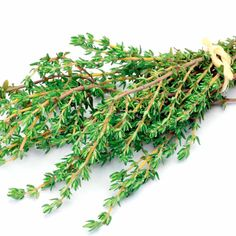 Herb Seed - Thyme Common Thyme Flower, Herb Seeds, Flower Seeds, All Vegetables, Planting Vegetables, Sutton Seeds, Parsley, Tomato Seeds, Edible Garden