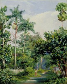 Road near Bath, Jamaica, with Cabbage Palms, Bread Fruit, Cocoa and Coral Trees - Marianne North