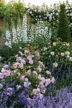 Farbschema für meinen Garten: Mixed Borders - Rosa 'Olivia Rose Austin' / bred by David Austin