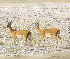 Ask.com Fauna, Impala, Moose Art, Creatures, Watercolor, Sketching, Nature, Animals, Projects