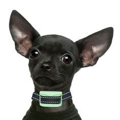 Bark Collar Small Dog - RECHARGEABLE PAIN FREE XS - Small - Beep & Vibration - Recommended Sensitive Anxious Dogs - Our K9 'Mint' Worlds Smallest Rechargeable Bark Collar Train your dog's behavior with a safe bark collar that helps them learn without hurting their Read  more http://dogpoundspot.com/dog-luxury-store-2532/  Visit http://dogpoundspot.com for more dog review products