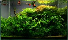 Show off your finished aquascape and planted aquarium layouts here.