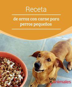 #Receta de arroz con carne para #perros pequeños  Si estás evaluando la opción de darle una #alimentación natural y casera a tu mascota, o simplemente quieres agasajarla con un #plato especial, te presentamos una receta de arroz con carne para perros pequeños.