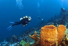 St. Lucia Tourism Attractions | Anse Chastanet Marine National Park