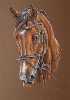 Pferd, Pferdeportrait, Pony, Reitpferd, Malerei, Tiere