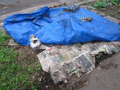 Turf Grass Removal--can be done in fall with newspapers and tarp