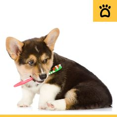 Gum disease is very common in pooches today. Here are some tips to take care of your best friends gums & teeth for his long and healthy life.. Sharing a link below that every dog owners should read and share: http://northsideanimalhospital.org/veterinary-blog/?p=6
