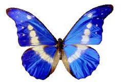 Party Supplies 24 X Royal Blue Butterflies Edible Cupcake Toppers & Garden
