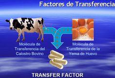 Origen de los Factores de Transferencia