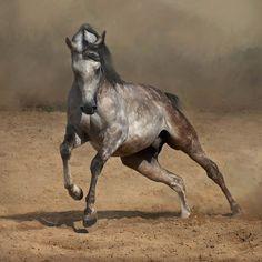 Breathtaking Arabians Breeding Horse Photography by Wojtek Kwiatkowski , http://itcolossal.com/?p=199678