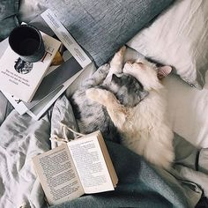 These cute cats will brighten your day. Cats are amazing companions. Cute Cats, Funny Cats, Adorable Kittens, Animals And Pets, Cute Animals, World Cat, Gatos Cats, Photo Chat, Cat Aesthetic