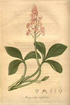 American medical botany ?being a collection of ...