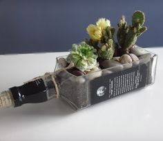Jack Daniels Whiskey Bottle Cactus and Succulent by Rehabulous, $38.99