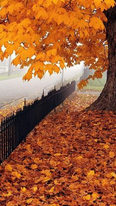 Misty Autumn Fence