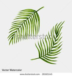 Watercolor tropical palm leaves. Vector illustration. - stock vector