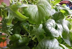 You can grow salads all winter long in recycled plastic containers under a couple of inexpensive fluorescent shop lights. See how on the Almanac.com blog.