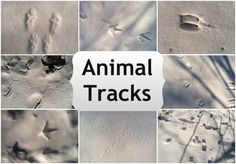 Winter Nature Walk {Animal Tracks} from @Yankee Homestead