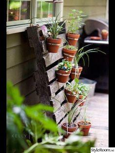 krukväxter,ampel,hängare