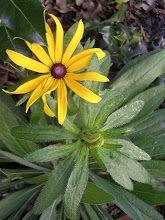 Herbalist Lisa Zahn: The Wet Socks Treatment
