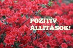 35 pozitív kijelentés, melytől garantáltan megváltozik az életed! – Filantropikum.com Stronger Than Yesterday, Change My Life, Positive Vibes, Destiny, Mantra, Motivational Quotes, Health Fitness, Spirituality, Mindfulness