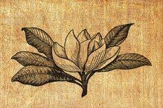 Image result for magnolia flower vintage