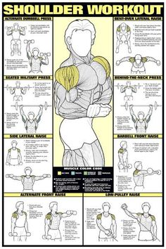 From the essential Fitnus collection of fitness wall charts, featuring the path to a proper shoulder workout! Includes sharp illustrations and detailed descriptions on eight key exercises, and a breakdown of the major shoulder muscles. This is the same poster that hangs on the wall in most major gyms...here's your chance to have it hang in yours! Exercises diagramed: Alternate Dumbell Press, Bent-Over Lateral Raise, Seated Military Press, Behind-the-Neck Press, Side Lateral Raise, Barbell...