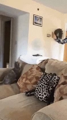 le meilleur chat qui attrape des truc lol