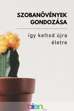 A szobanövények gondozása nem mindig gyerekjáték, de aggodalomra semmi ok, ugyanis ezekkel a szuper tippekkel újra életre kelnek a szobanövények a lakásban! #szobanövényekelhelyezése #szobanövényekgondozása Planter Pots