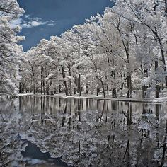 snowy reflection