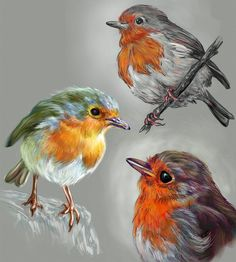 Sketches of Red Necked Robins by digit-Ds on DeviantArt