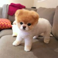 cutest dogs - Yahoo Image Search Results