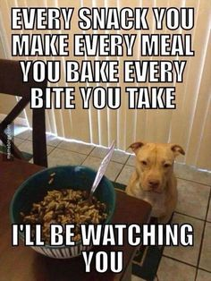 Funny Animal Pictures Of The Day - 12 Images