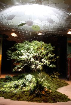 Lowline underground park in New York