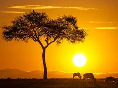 Reserva de Masai Mara en Kenya
