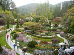 ▶ Butchart Gardens, Victoria, British Columbia, Canada #butchartgardens #布查特花園