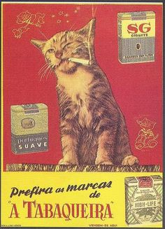 """Cats in Art and Illustration: Tabaqueira, (Scanned from the book """"Portugal Século XX, Crónica em Imagens, by Joaquim Vieira) Pub Vintage, Vintage Cat, Vintage Images, Weird Vintage Ads, Vintage Cigarette Ads, Posters Vintage, Vintage Advertising Posters, Image Chat, Photo Chat"""